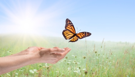 Female hands releasing a monarch butterfly over a field of wild flowers.